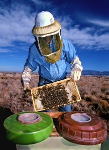 Image source: http://www.sandia.gov/LabNews/LN04-23-99/bee_story.htm